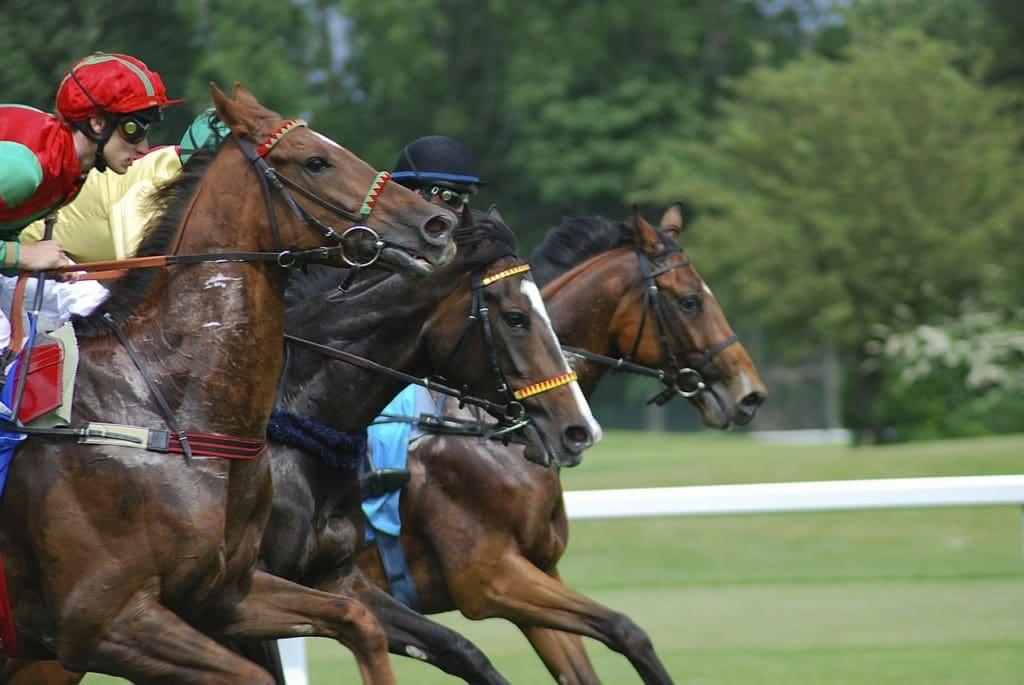 競馬 馬 年齢