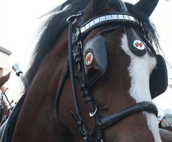 神経質な馬の視野を制限して落ち着かせる「ブリンカー」